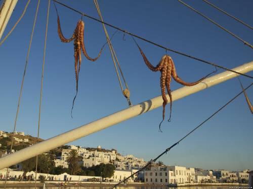 Миконос, кальмары сушатся